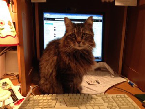 Strategic Product Manager Sam Player's cat Jade does not seem to understand this work from home thing.