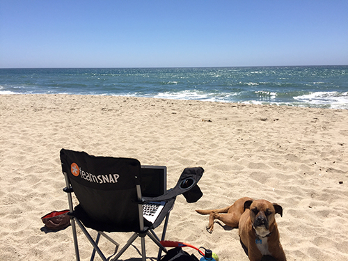 VP of Product Terri Schmier enjoys the occasional beach workday in California with her pup Baja. Not pictured: Terri.