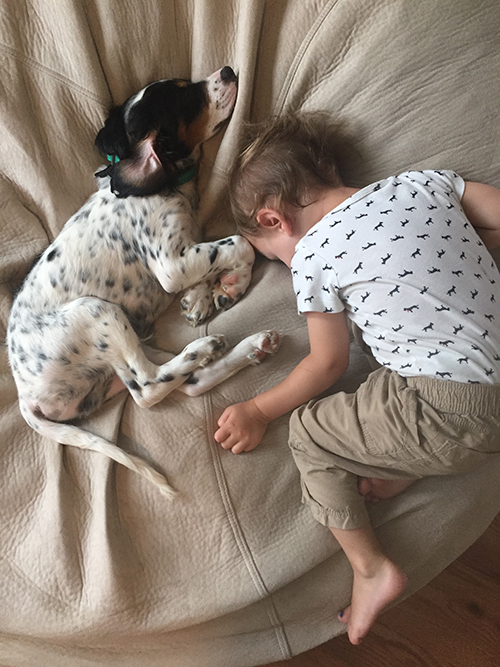 Ashley Cayla's (customer support) Louie, an English Setter, is clearly amazing with kids (and is pretty much the third kid).