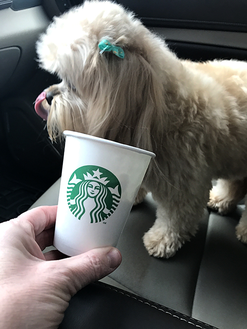 Here is Bella sweet Peek a Poo to Kim Robbins (customer support). She is 3 years old and loves attention. She thinks she is a person and has to go everywhere with us and even loves a good cup of coffee.